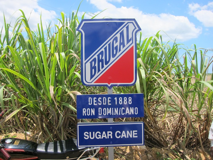 Brugal Rum Sugar Cane Fields Used to Make Brugal Rum