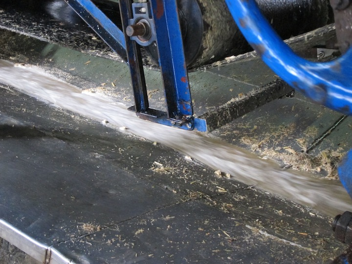 Sugar Cane Cut and Pressed at Rhum JM