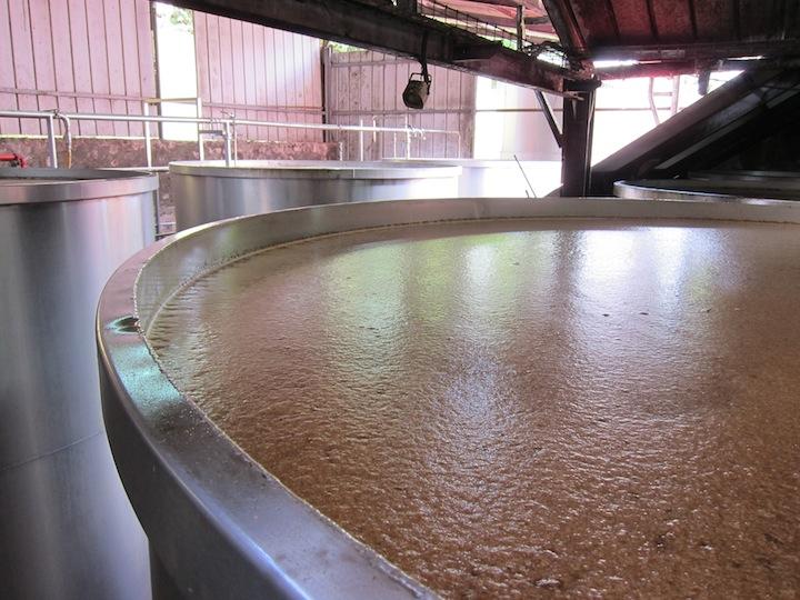 Sugar Cane is Fermented at Rhum JM