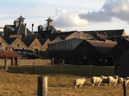 Highland Park Distillery (photo Mark Gillespie)