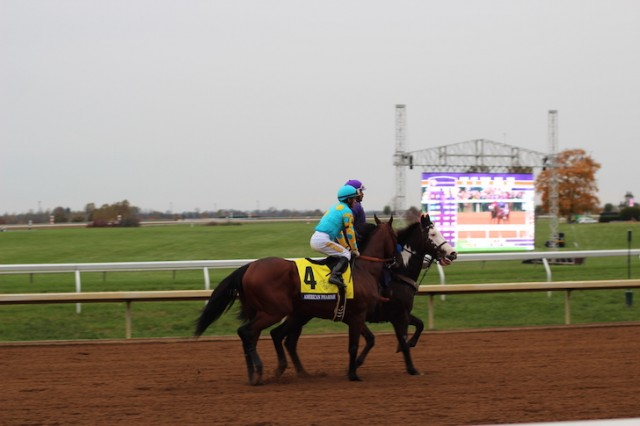 American Pharaoh at The Breeders Cup