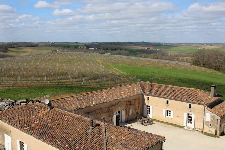 The Vineyard at Chateau Pellehaut