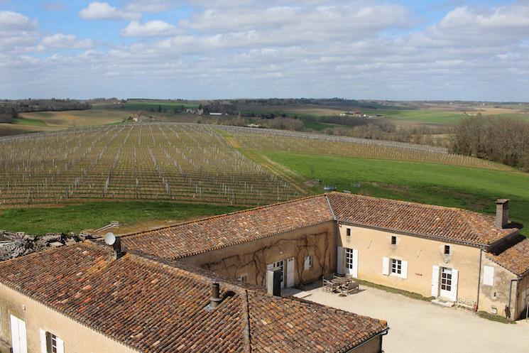 The Vineyard at Chateau Pellehaut
